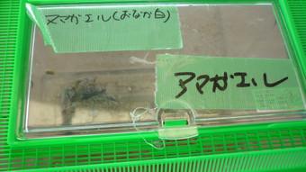20110723_jahyougokokkou_065